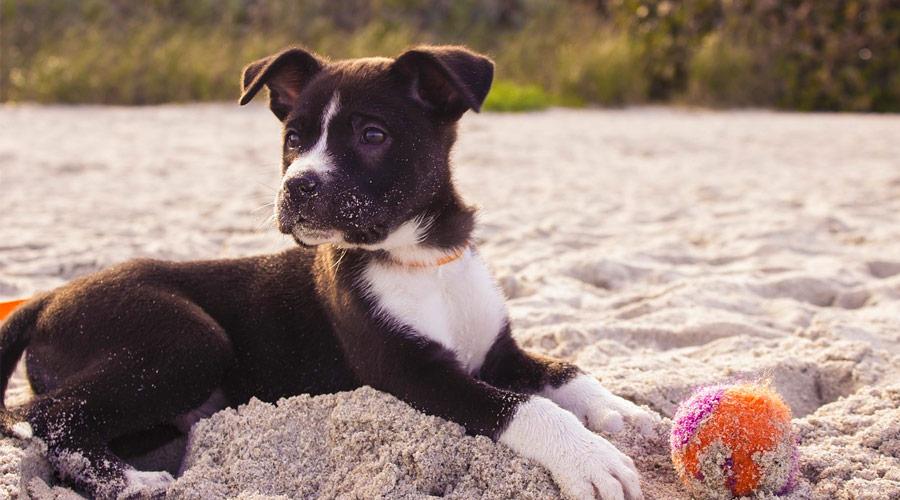 Andare in spiaggia con il proprio cane nel Salento
