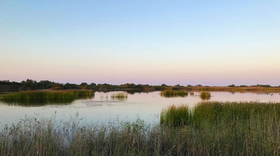 Le paludi delle Cesine vicino Vernole
