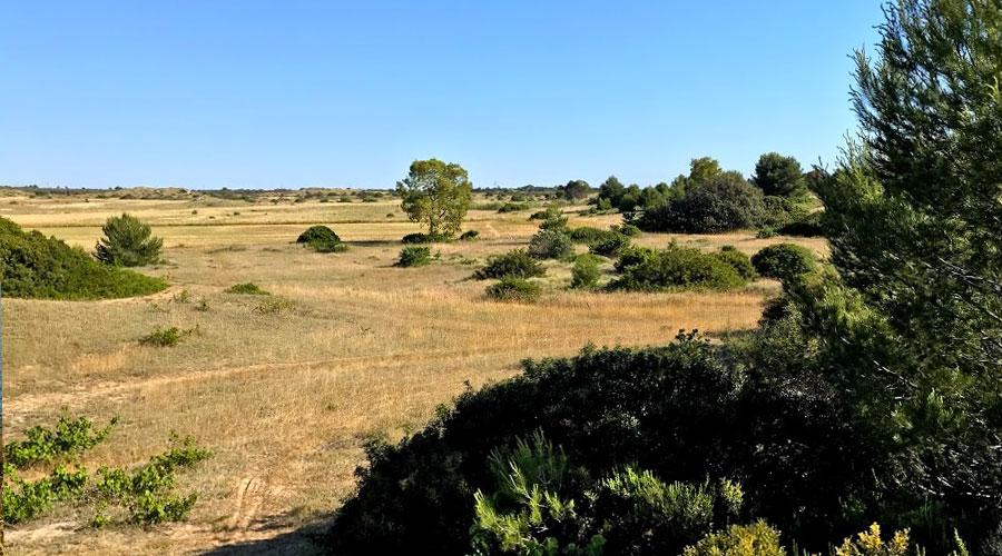 Il Parco di Punta Pizzo a Gallipoli