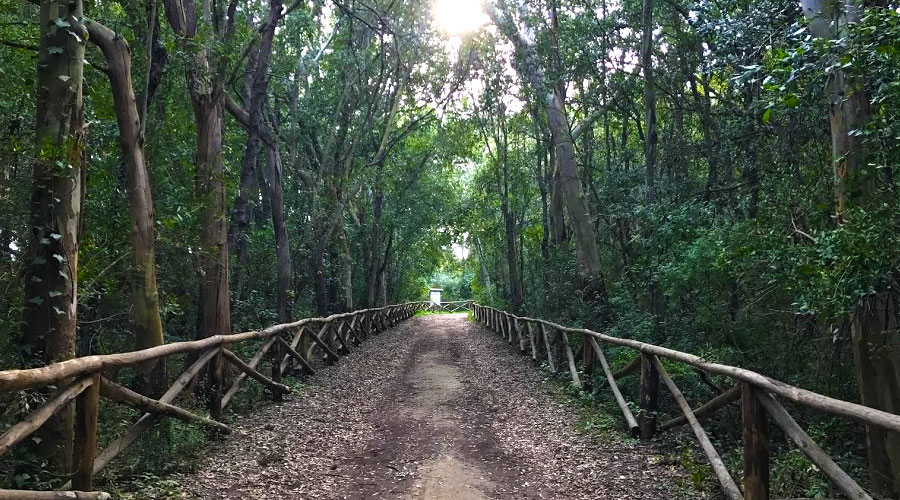 Parco del Rauccio vicino Torre Rinalda
