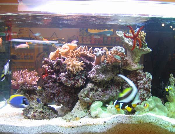 Acquario marino mediterraneo pesci acquario marino for Pesci per acquario tropicale