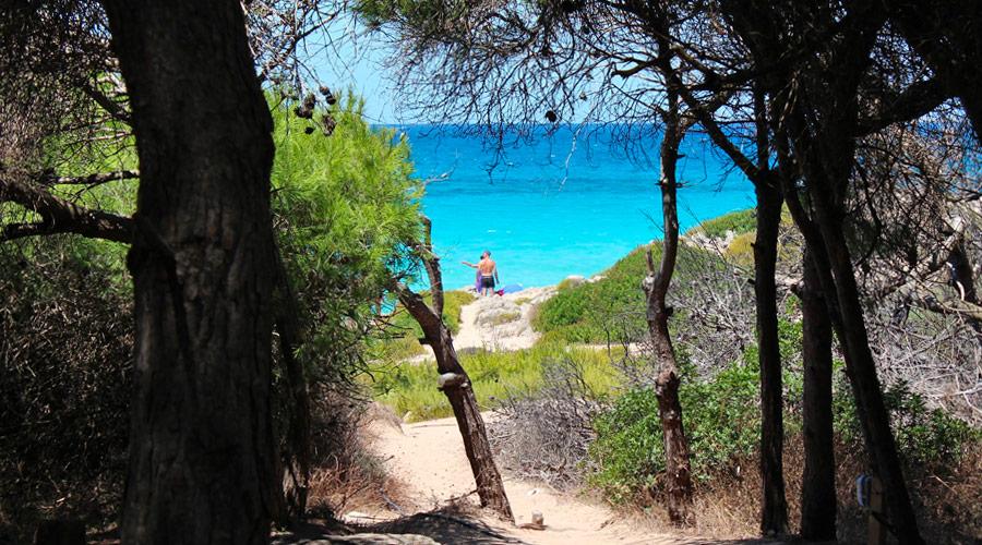 Uno dei tanti sentieri che porta alla spiaggia di punta della suina